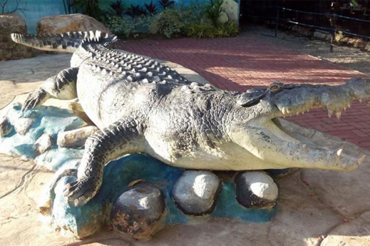 ダバオおすすめ観光地 クロコダイルパーク (crocodile park)