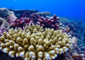 フィリピン セブ島 ダイビング