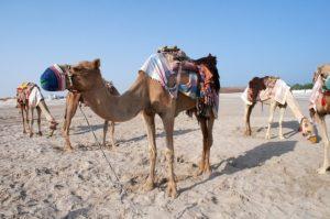 UAE留学 ドバイ留学 アラビア語留学
