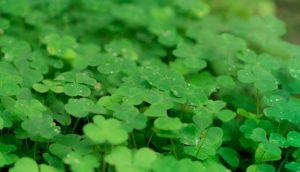 アイルランド 体験談 雨が多い